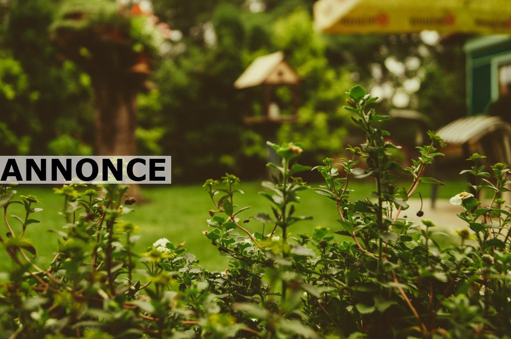 Sådan får du den perfekte have